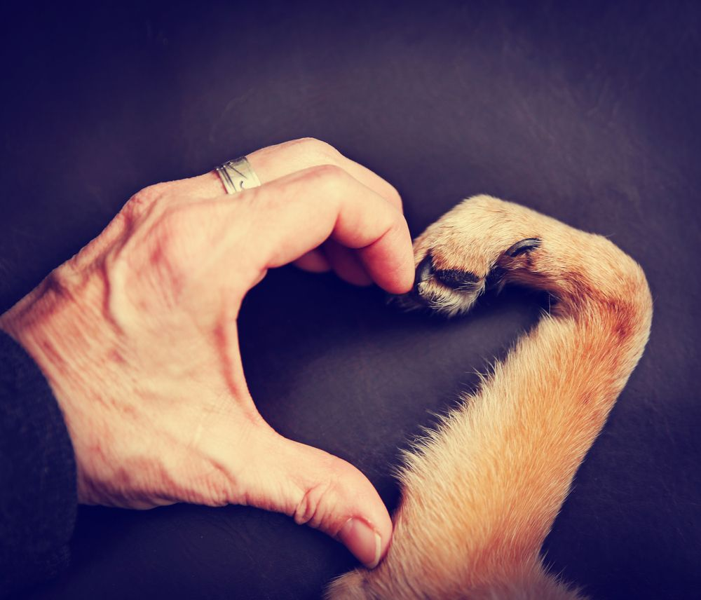 man and dog heart sign