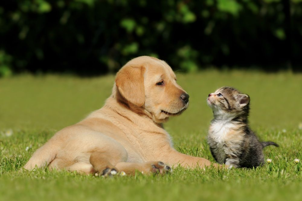 dog and cat lying on the grass