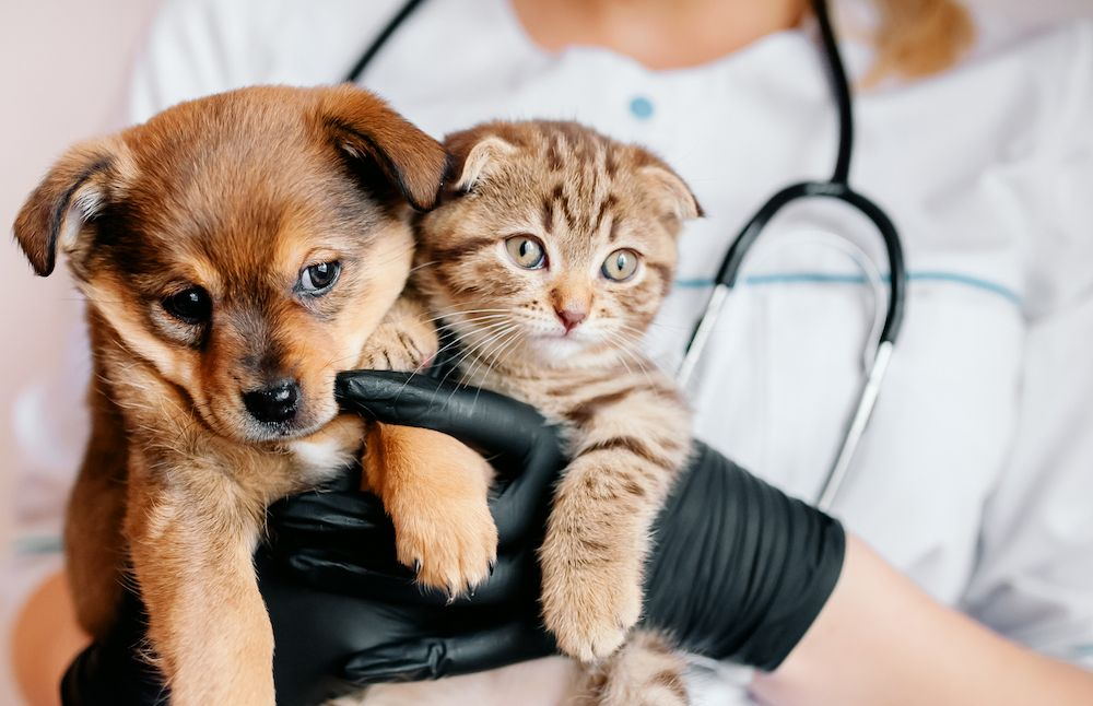 What to Expect From Your Puppy or Kitten's First Exam