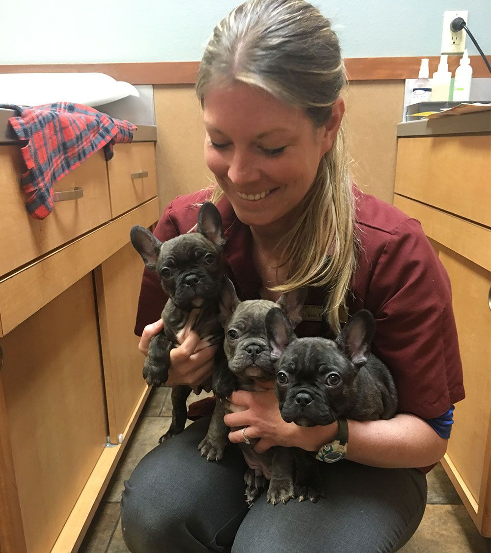 Bailey Veterinary Clinic, Veterinarian in Roseburg OR