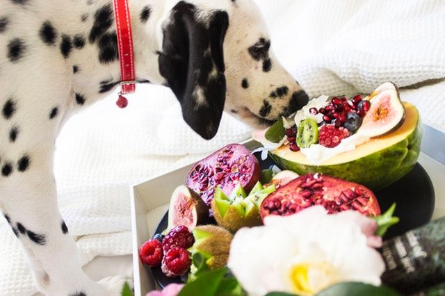 Nutritional Support | Joint Health For Dogs
