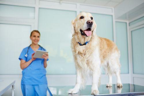 Three Reasons to Visit an Animal Hospital