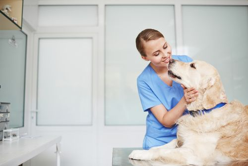 3 Signs Your Pup Needs To Visit the Animal Hospital