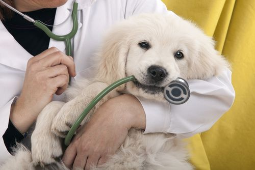Animal Hospital Tips: 3 Injuries That Require Rehab