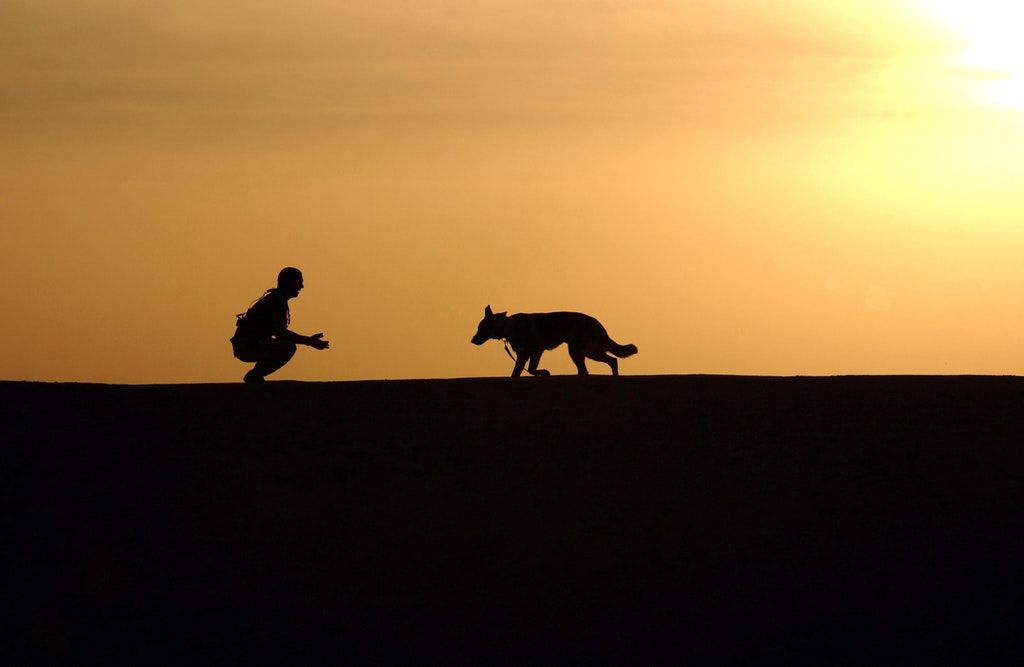 Animal Rehabilitation | Forget the Ruff Stuff!
