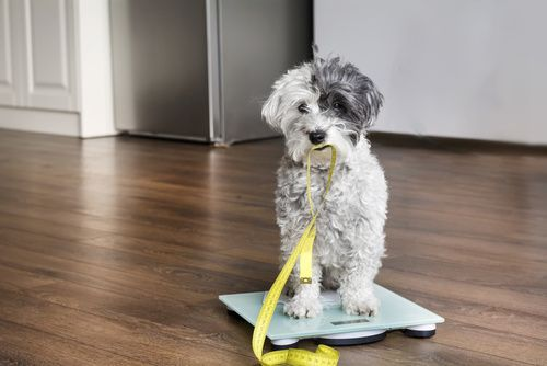 Canine Hospital Tips: 3 Ways to Manage Your Dog's Weight