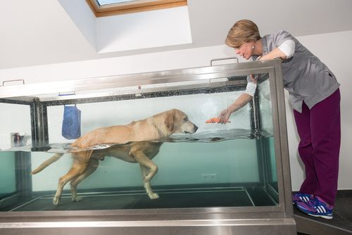 How Hydrotherapy Works for Dogs