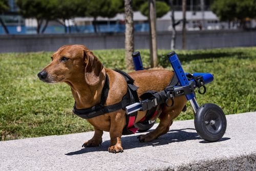 Orthopedic Conditions to Watch For in Your Dog