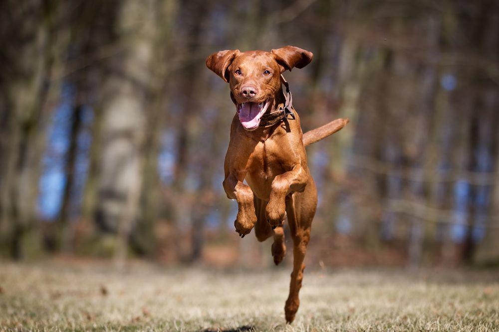 Warm Moist Heat Use in Canine Rehabilitation