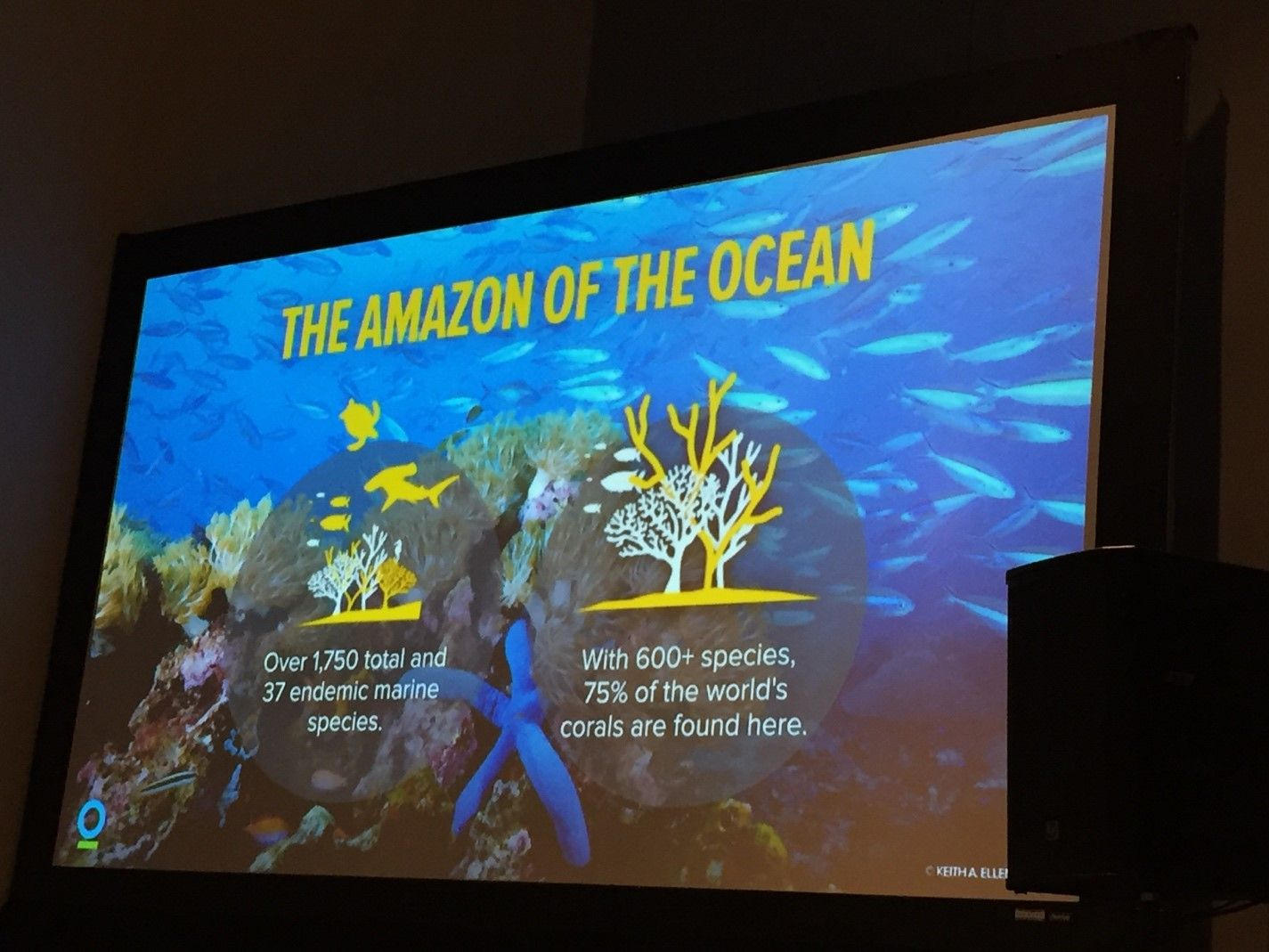 Using Virtual Reality To Bring Awareness To Saving Our Coral Reefs