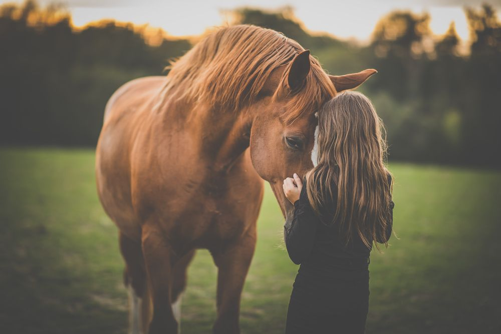 How to Choose the Right Vaccinations for Your Horse