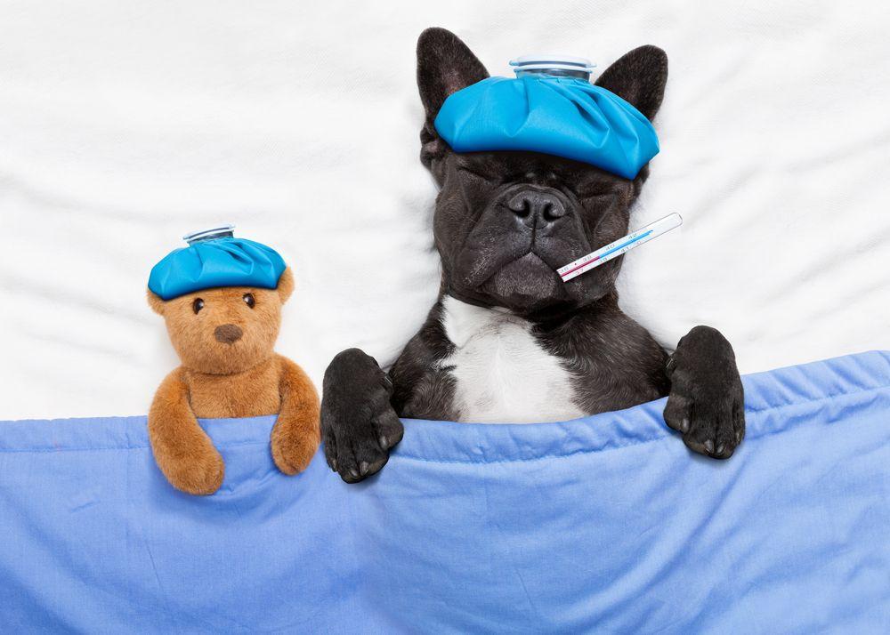 Veterinary Medical clinic