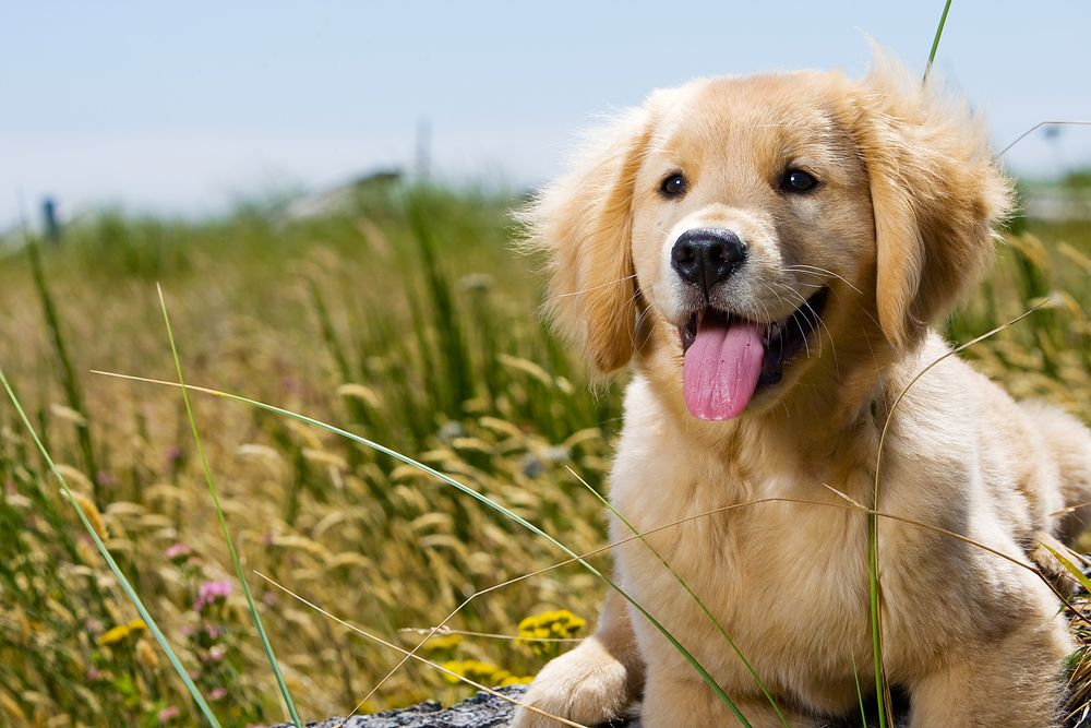 Does My Pet Need to Attend Annual Wellness Exams?
