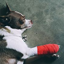 Traumatic injuries - fractures, bites, burns, lacerations