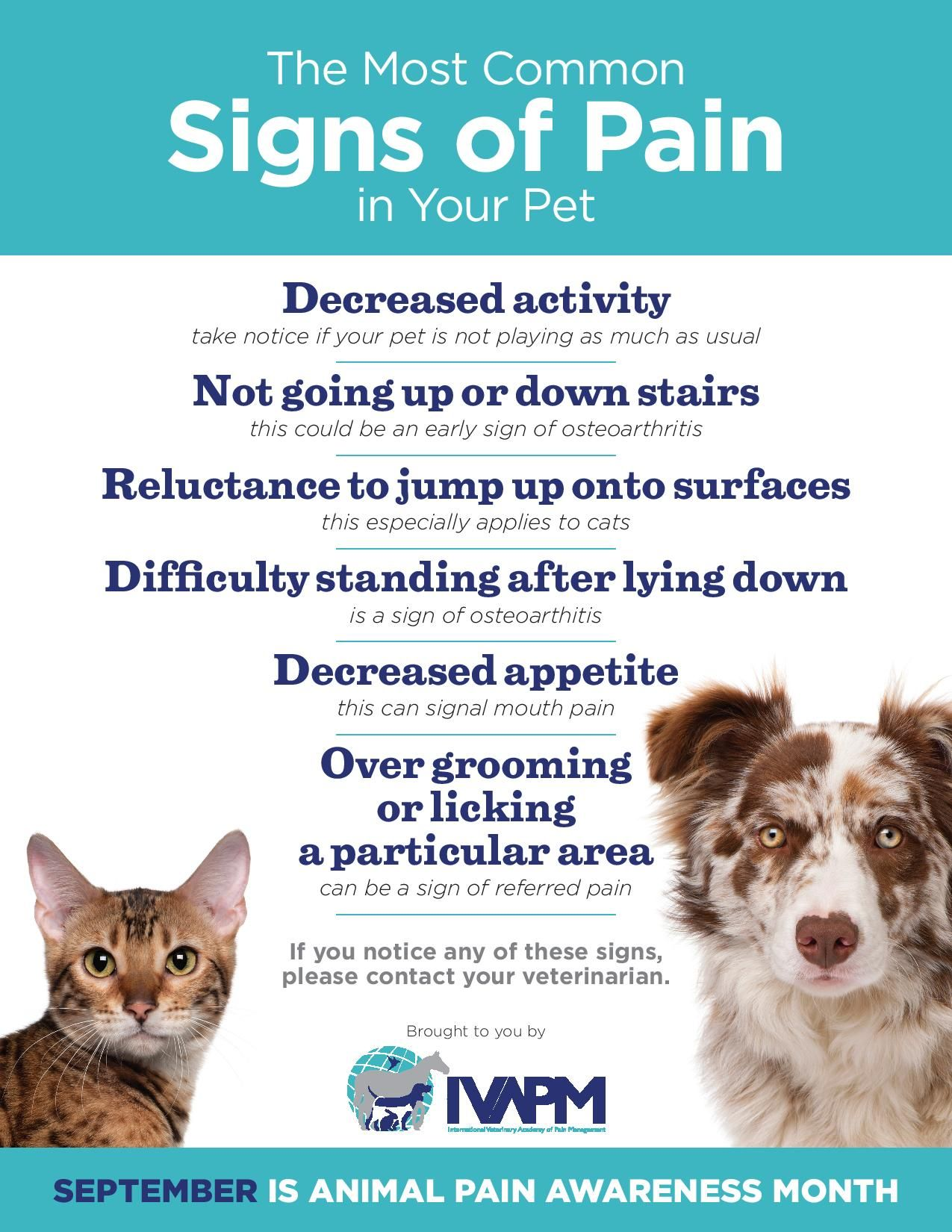 August is National Itchy Pet Awareness Month