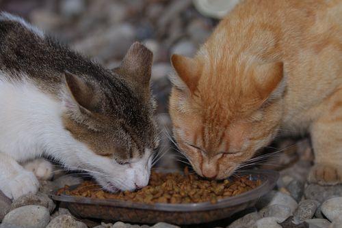 Feral Cat/Trap