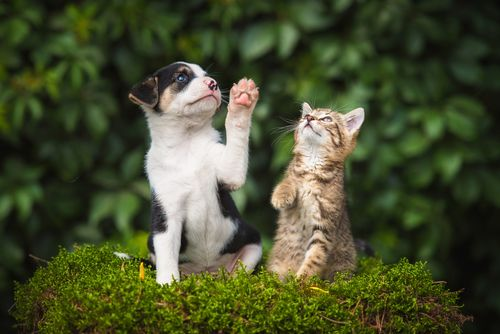 playing cat and dog