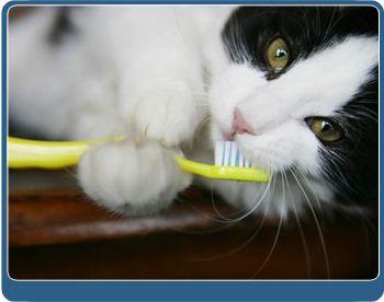 animal dentist Overland Park KS (66202, 66203, 66204, 66212, 66214, 66215) -  dog dentist Overland Park KS (66202, 66203, 66204, 66212, 66214, 66215) - pet dentist Overland Park KS