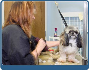 dog boarding Kansas City KS - dog grooming Kansas City KS - cat boarding Kansas City KS - pet grooming Kansas City KS