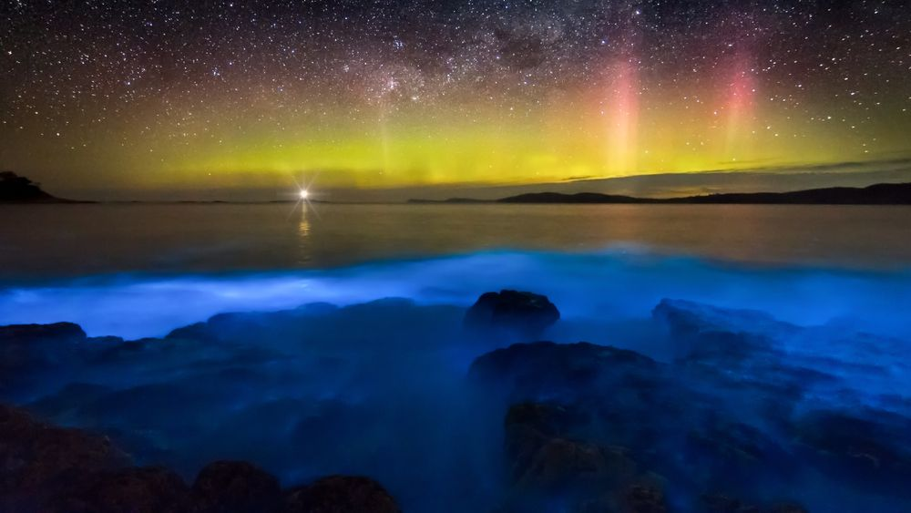 Best Places in the World to Witness Bioluminescence