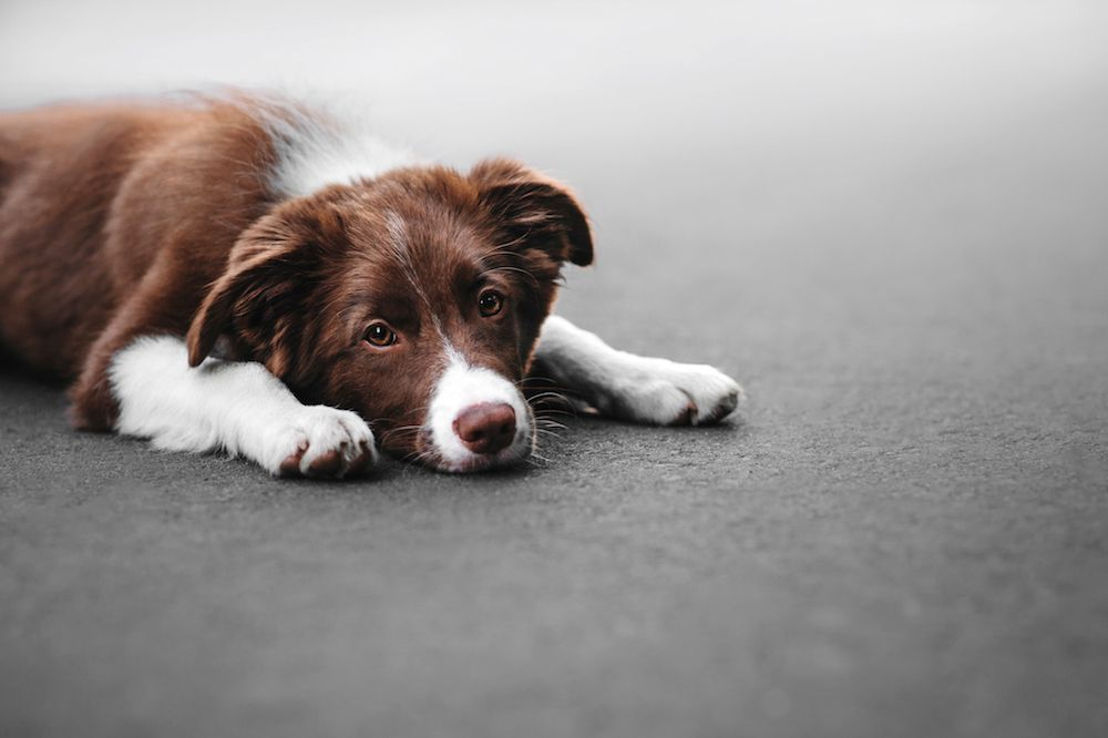 How Do I Know if My Pet Is Allergic to His Food?