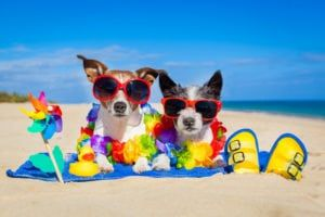 pets in the summer