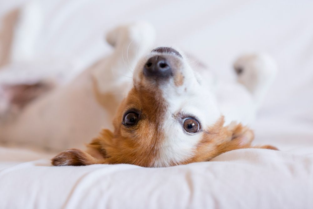 Common Questions About Pet Microchips