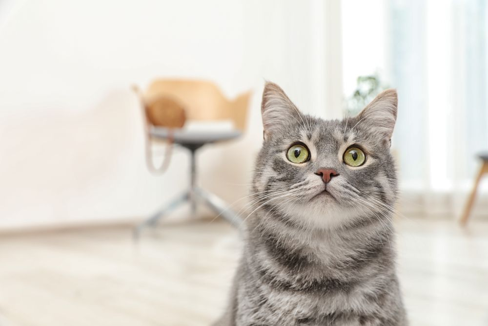 Pet Health Certificates: What You Need to Know