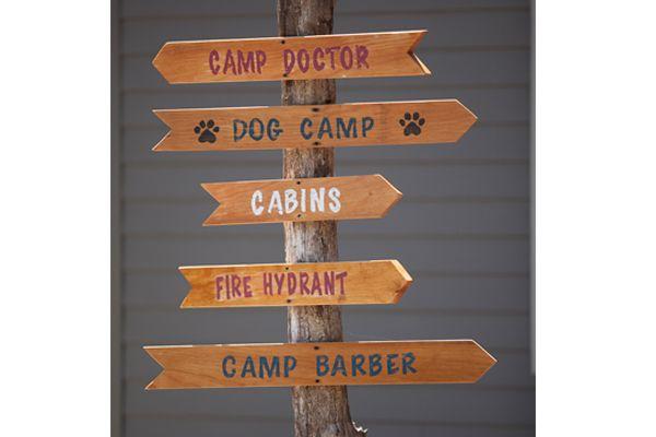 dog camp arrows
