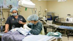 pet surgery