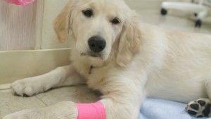 fractured dog