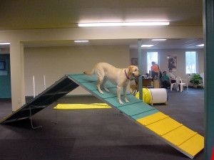 dog training activity