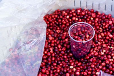 Are Cranberries Contributing to Your Toxic Load?