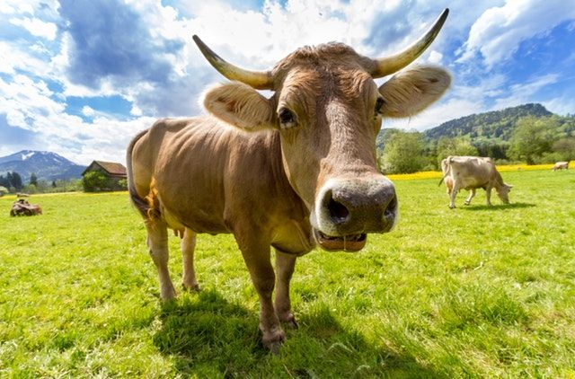 Collagen:  Do You Need it From Animals?
