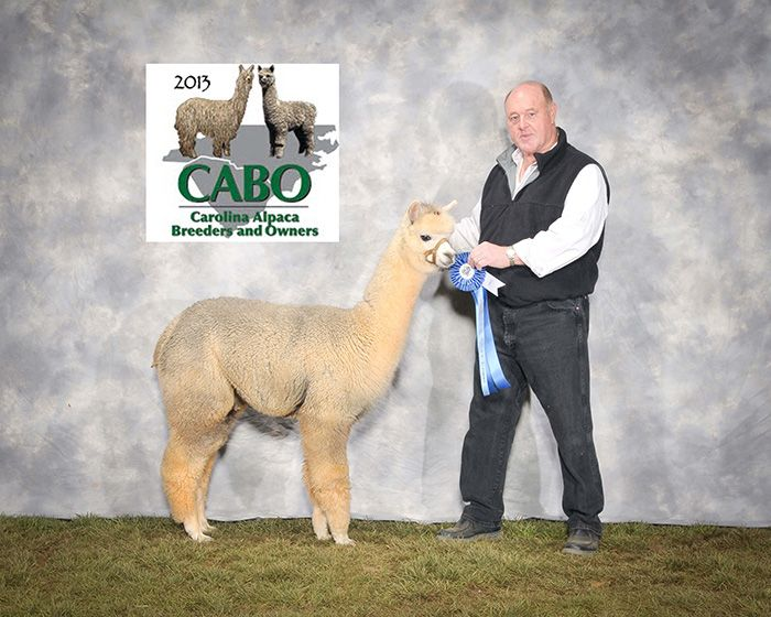 Stock Sales At Awesome Alpacas