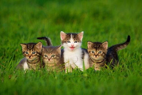 cats on field