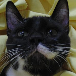 bow cat