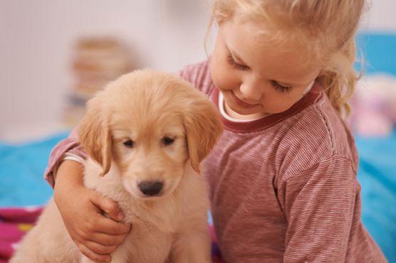 DoggieDay Care