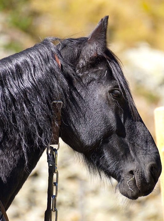 Important Information About Horse Examinations and Vaccines