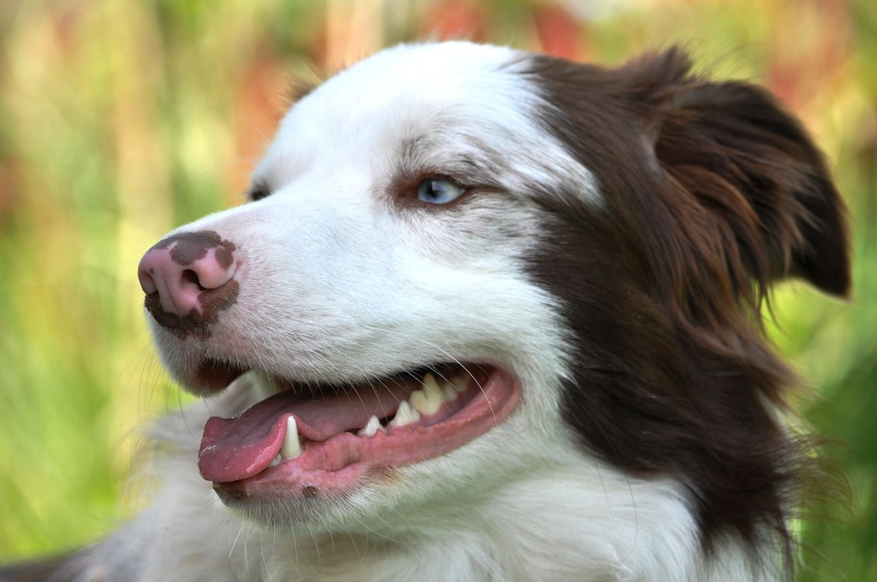 Why you should take care of your pet's teeth