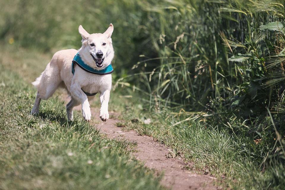 Fun Activities To Enjoy With Your Dog
