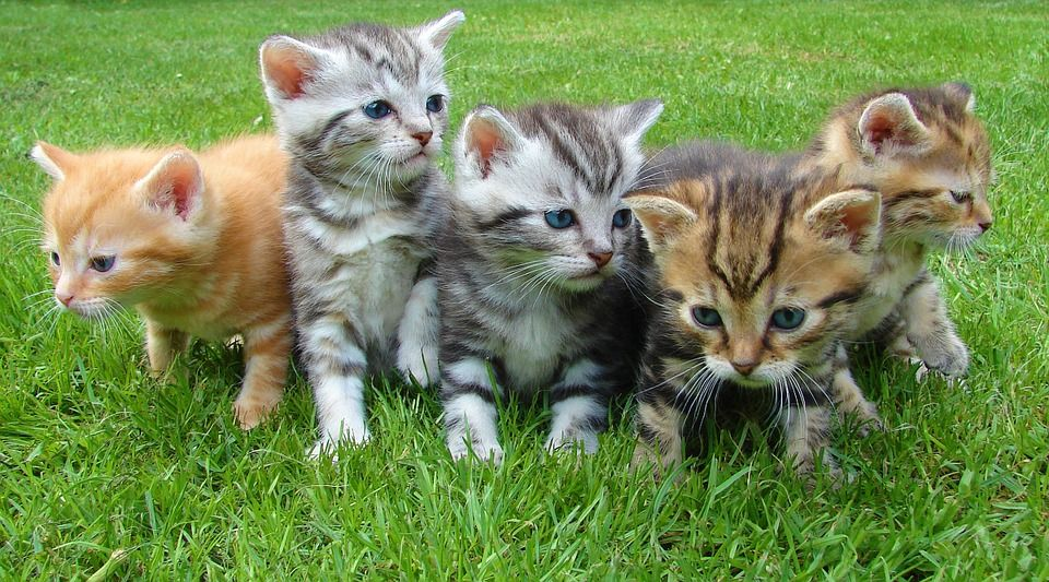 What You Need to Know About the Birth of Kittens