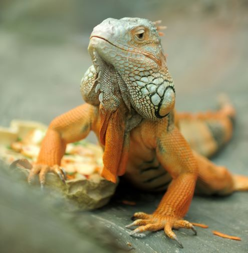 Holiday Safety for Exotic Pets