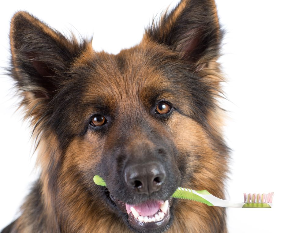 Tools for At-home Pet Dental Kit