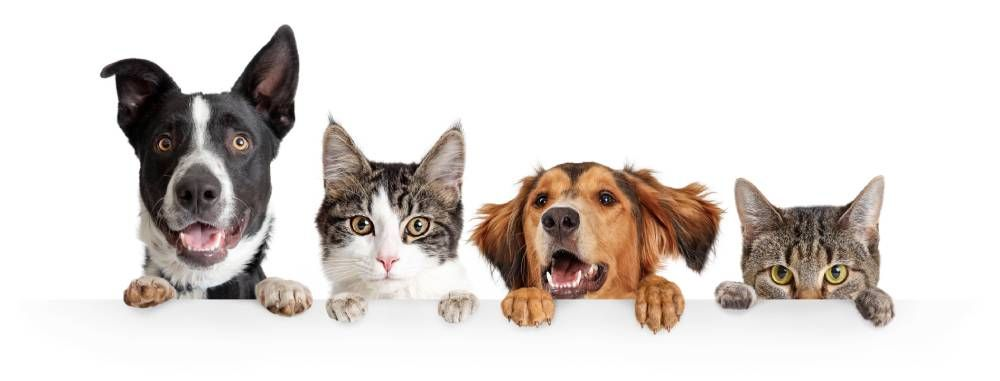 Importance of Routine Pet Wellness Exams
