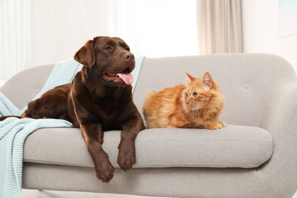 FAQs About Pet Dental Health