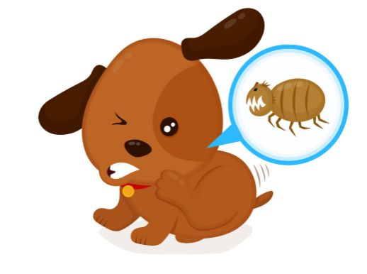 What Causes a Pet to Have Fleas?