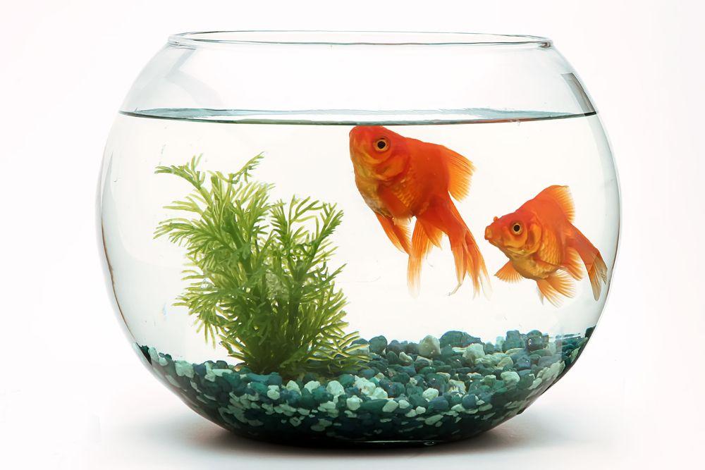 How Do I Keep My Fish Happy?