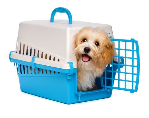happy dog in carrier