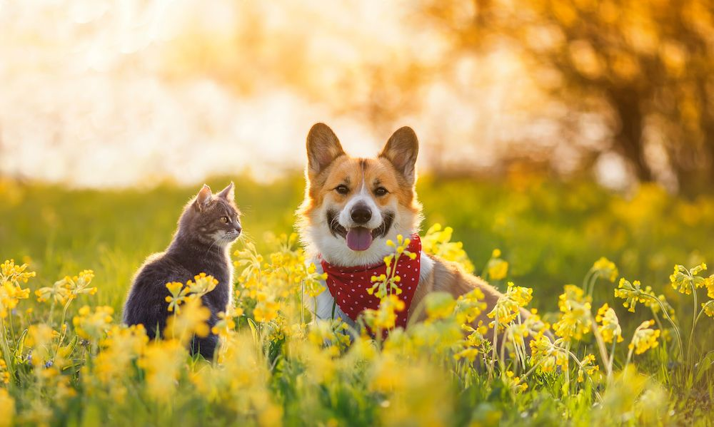 How to Protect Your Pets from Fleas, Ticks, and Mosquitoes This Summer